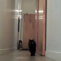 Macsek reakció