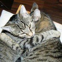 Testvéri cicaölelés