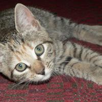 Augusztusban ismét cica nyerte a cukipólót