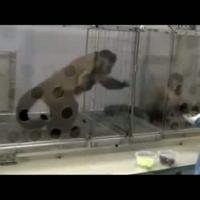 Szőlőszemet minden majomnak