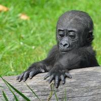 Bongo felfedezi a világot