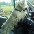 Frodi vezet