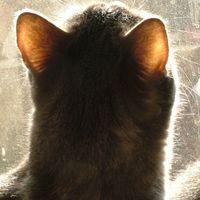 Koncentráljunk a fülön átszűrődő napsugárra
