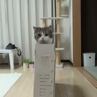 Maru és a keskeny doboz