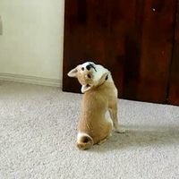 Mit csinálsz a hátam mögött?