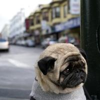 A világ legszomorúbb kutyája