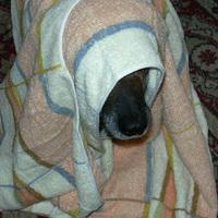 Az arcnélküli kutya orra