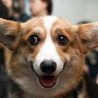 Kutyák, akik tudnak meglepetést okozni