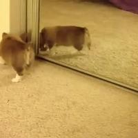 Kiskutya találkozása a tükörrel