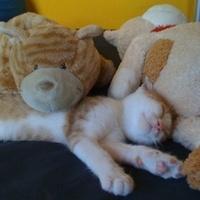 Alvó és/vagy téli állat: kidőlt a papírgalacsinok miatt
