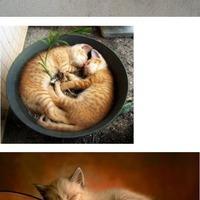 A macskák ott alszanak ahol csak akarnak