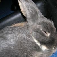 Alvó és/vagy téli állat: karjára hajtja fejét a nyúl