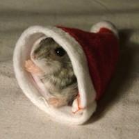 A sapkába bújt hörcsög 2007 karácsonyi cukija