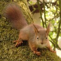 Titkos részletek egy mókus mindennapjaiból