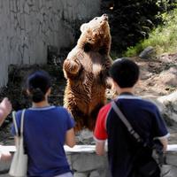 Táncol a medve, fotózzák a látogatók