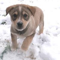 Alvó és/vagy téli állat: Béla Braun imádja a havat