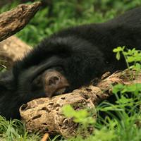 Bangkok Zoo I.: szabadfogású alvásgyakorlatok