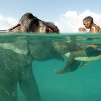 Rajan, a búvárkodó elefánt