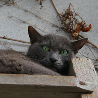 Egy napozó macska és egy szafaládé