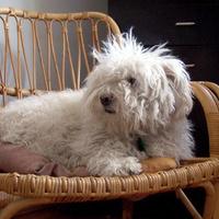 Zsömle kutya télen-nyáron