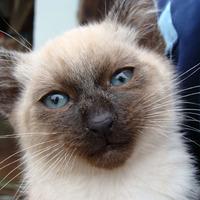 Kakaó és a kék szemek