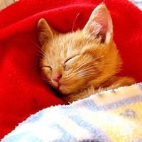 Tigriske úgy alszik, mint egy ember