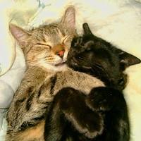 Alvó és/vagy téli állat: két szerelmes pár, mindig együtt alsz
