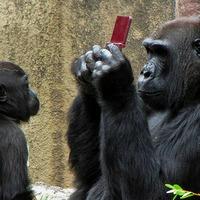 Geek gorilla nem tudjuk mit csinál