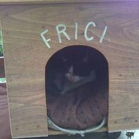 Frici jelenleg  házon kívül van