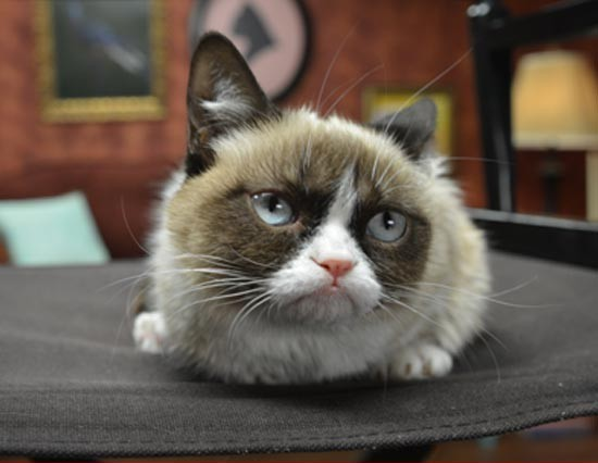 0307-grumpy-cat-3.jpg