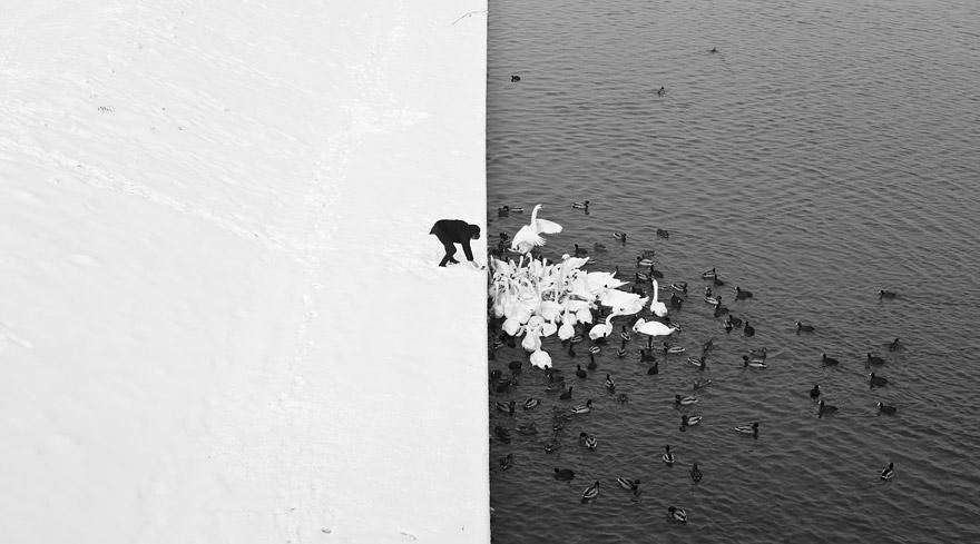 animals-in-winter-10.jpg