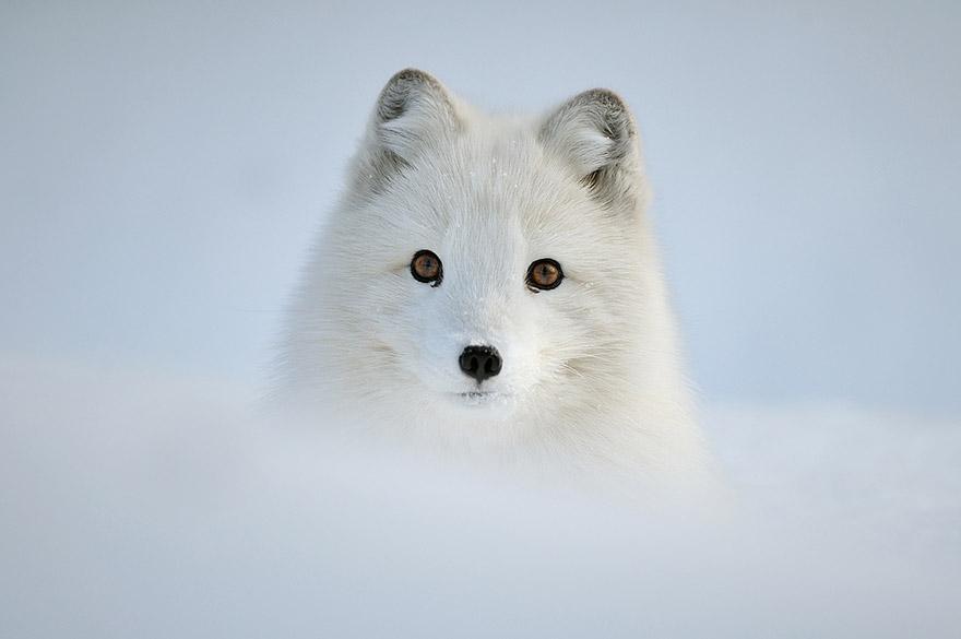animals-in-winter-12.jpg