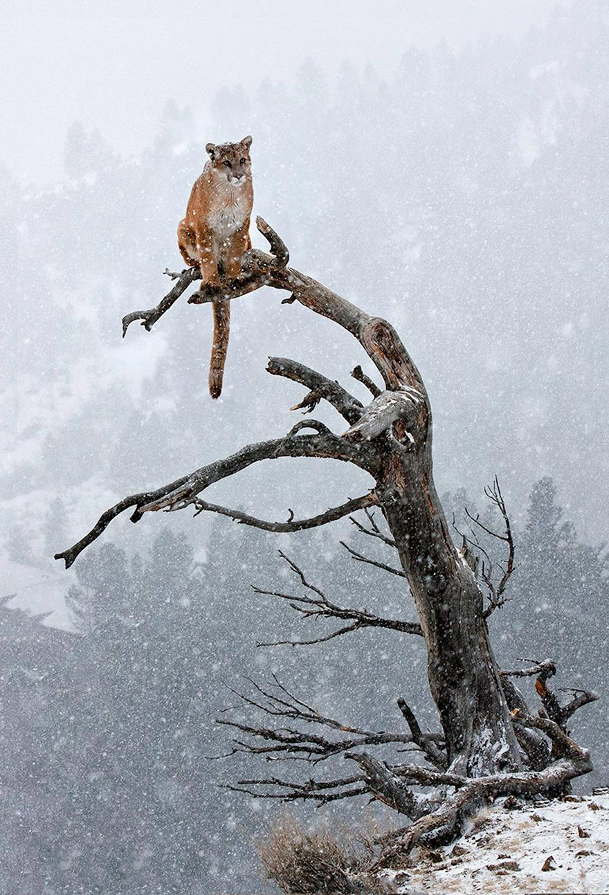 animals-in-winter-13.jpg