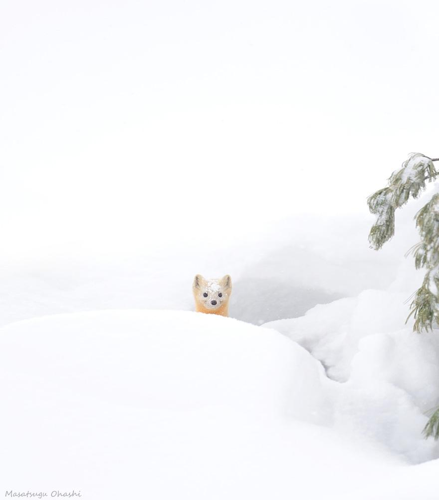 animals-in-winter-14.jpg