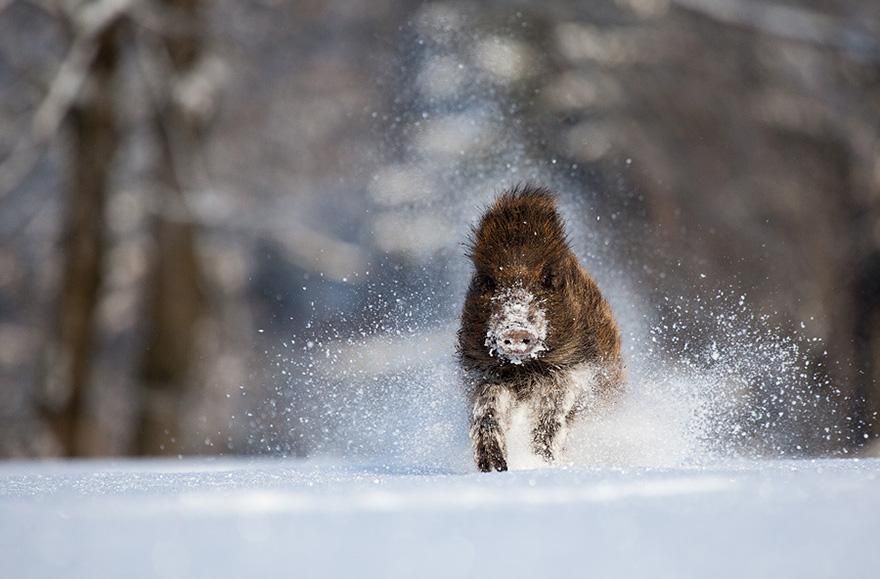 animals-in-winter-16-2 (1).jpg