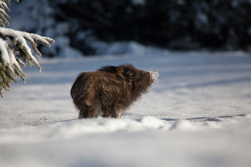animals-in-winter-16.jpg