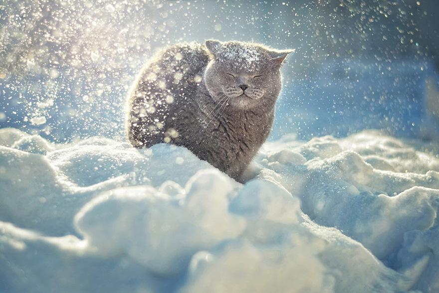 animals-in-winter-18.jpg
