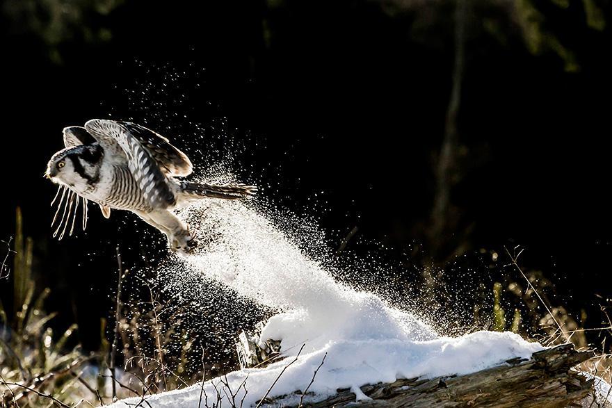 animals-in-winter-20.jpg