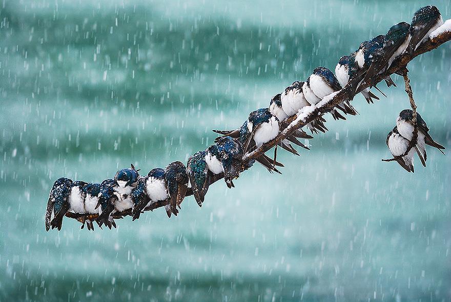 animals-in-winter-3.jpg