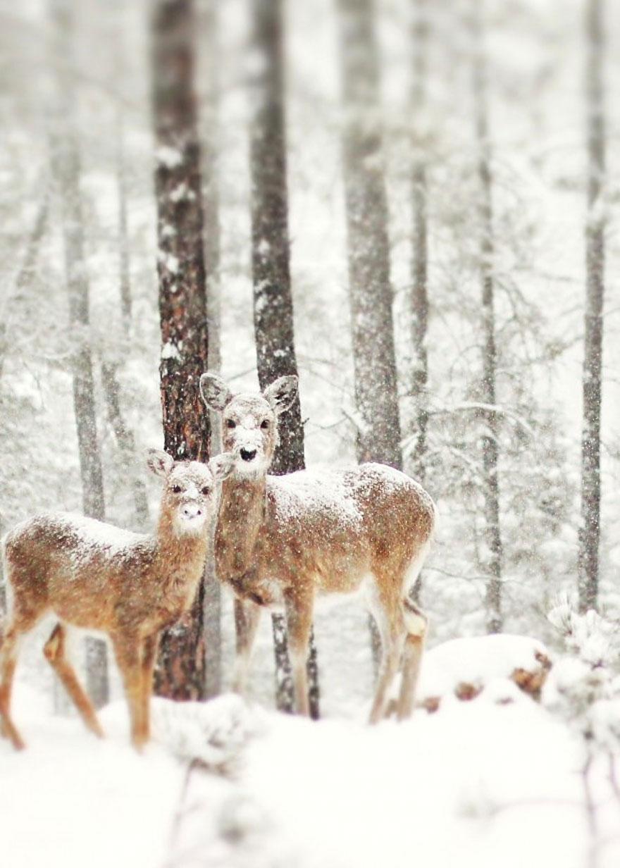 animals-in-winter-4.jpg