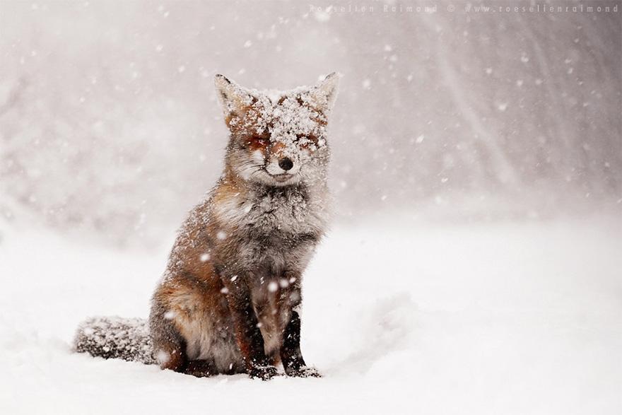 animals-in-winter-5.jpg
