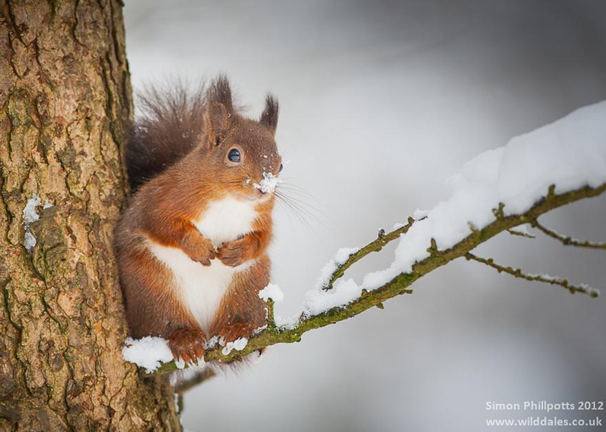 animals-in-winter-6.jpg