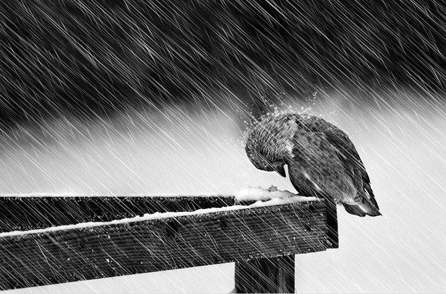 animals-in-winter-7.jpg