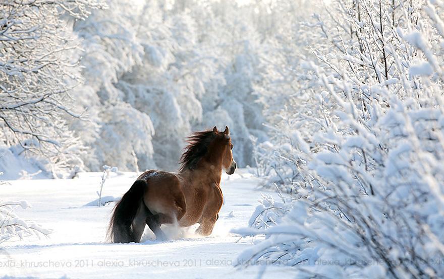 animals-in-winter-8.jpg