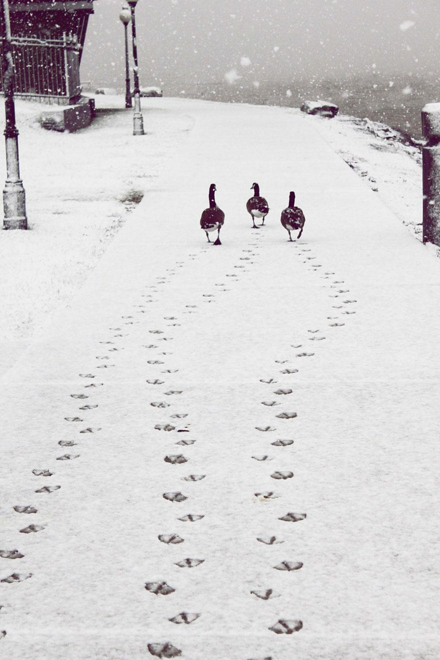 animals-in-winter-9.jpg