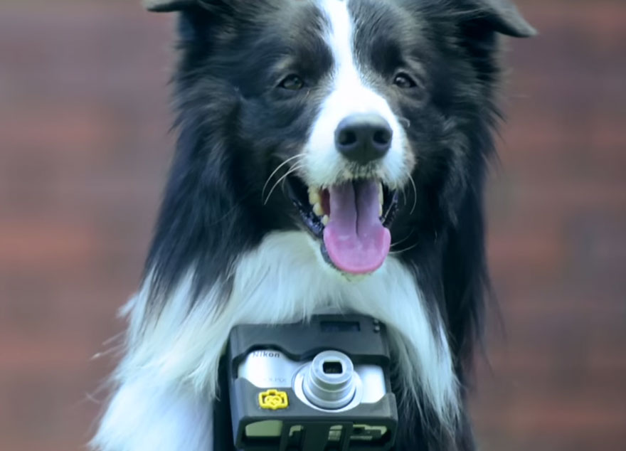 dog-takes-photos-heart-rate-monitor-phodographer-heartography-nikon-12.jpg