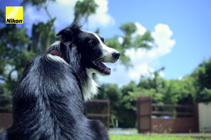 dog-takes-photos-heart-rate-monitor-phodographer-heartography-nikon-15.jpg