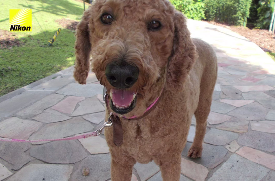 dog-takes-photos-heart-rate-monitor-phodographer-heartography-nikon-8.jpg