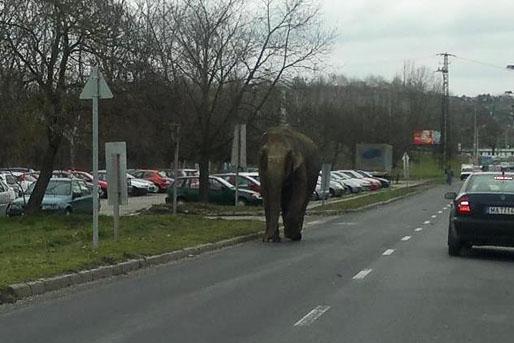 elkoborolt-elefant-zalaegerszegen.jpg