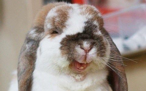 funny-bunny-29111.jpg
